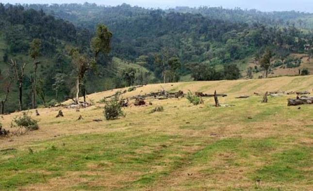Mau Forest(2)